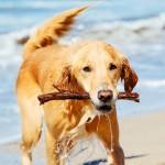 Las 8 mejores playas para perros de España