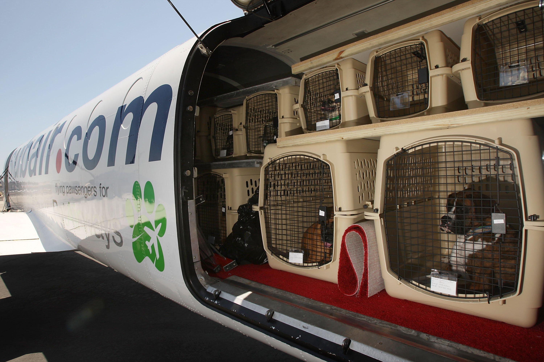 perros en la bodega del avión