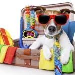 Aeropuerto de Málaga: requisitos para viajar con mascotas