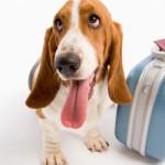 Cómo debe ser el transportin para viajar con perros en avión