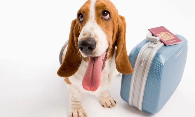 Viajar con perros en el avión