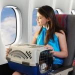 Documentación necesaria para viajar con mascotas al extranjero