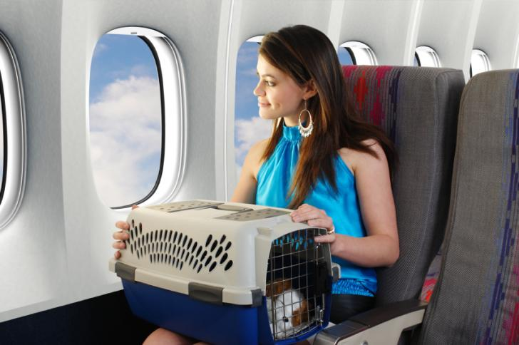 Documentación necesaria para viajar con mascotas