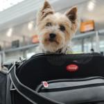 ¿Cómo evitar que tu perro se estrese al viajar en avión?