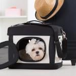Viajar con mascotas: ¿Tren, barco o avión?