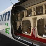 Consejos para viajar con tu perro en la bodega del avión